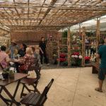 Café com Orquidea 21