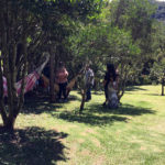 Fazenda Agua da Capoeira Colhe e Pague Caqui Fuyu 01