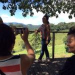 Fazenda Agua da Capoeira Colhe e Pague Caqui Fuyu 04