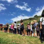 Fazenda Agua da Capoeira Colhe e Pague Caqui Fuyu 10