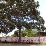 Fazenda Coruputuba 104 Anos 37