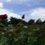 Fazenda Coruputuba 26