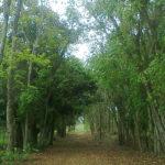 Fazenda Coruputuba 31
