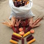Fazenda Coruputuba e Trip Rural 03