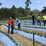 Dia de Campo Tomate Organico Eco Recanto Lotus 02