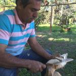 Pássaros, artesanato em madeira